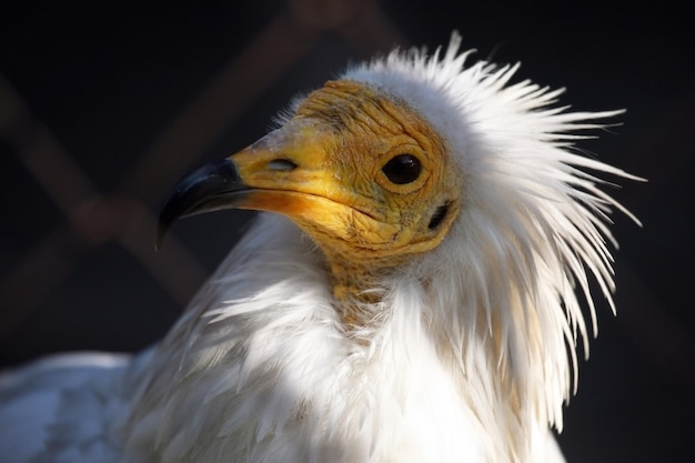 Un ave de la familia del águila.