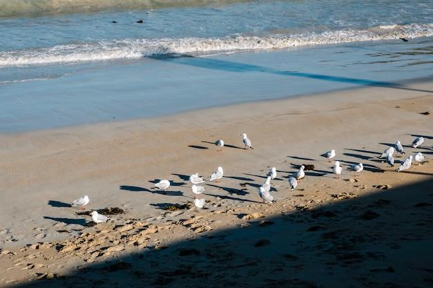 Ave marina sobre arena y mar