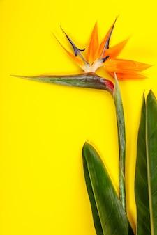 Ave del paraíso flor strelitzia reginae
