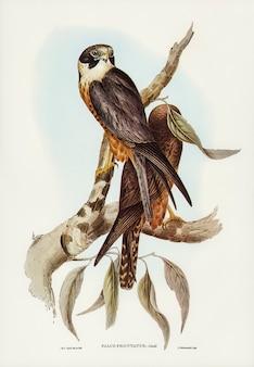 Aves de australia