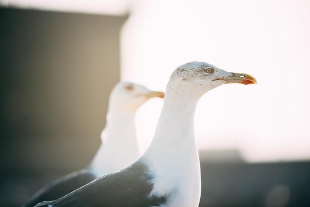 Aves gaviotas en una torre del castillo fuerte en essaouira