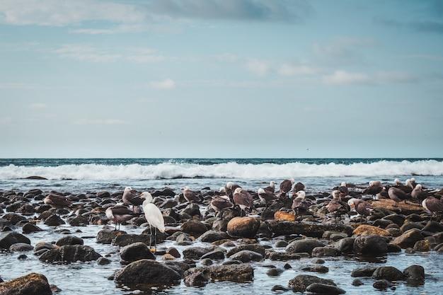 Aves marinas en busca de alimento sobre un fondo de mar y cielo azul en la playa de sayulita, nayarit, méxico