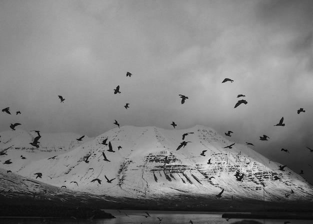 Aves en la montaña en blanco y negro.