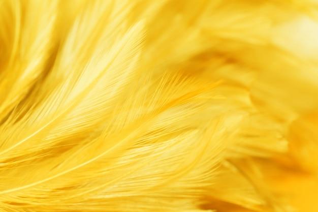 Aves y plumas de pollo en un estilo suave y borroso para el fondo