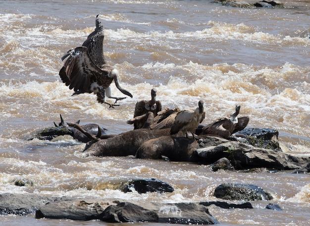 Las aves rapaces en vuelo kenia tanzania safari áfrica oriental