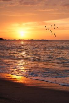 Aves rumbo al sol al atardecer.