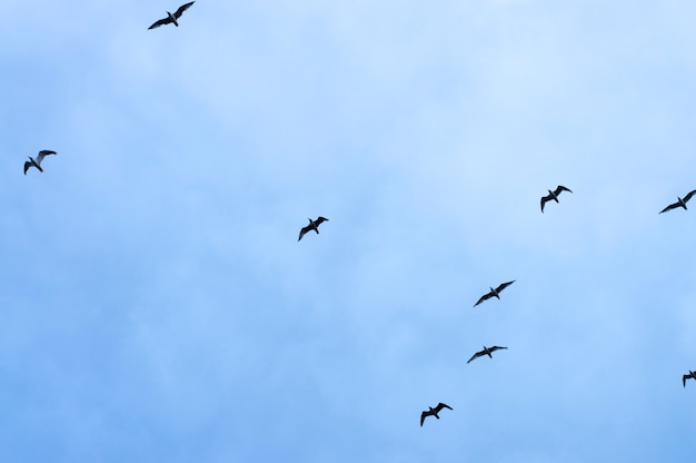 Aves de silueta sobre fondo de cielo