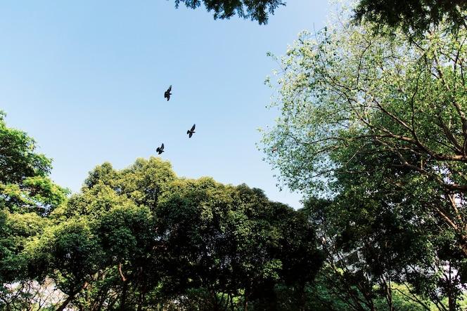 Aves volando en el cielo azul