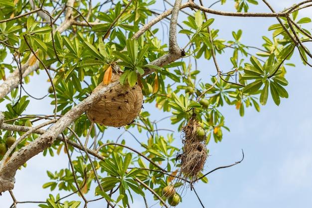 Avispa, nido, en, árbol, en, bosque