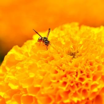 Avispa sobre una flor amarilla