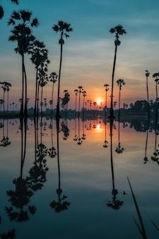 Azucare el campo de la palmera con la reflexión en el agua antes de la salida del sol tan hermosa.