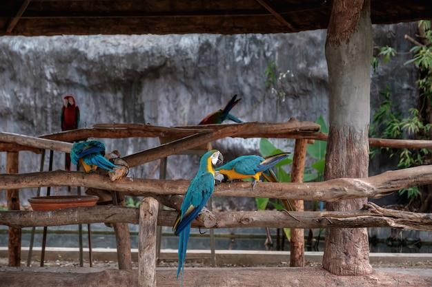 Azul y amarillo guacamayo están de pie sobre un palo.