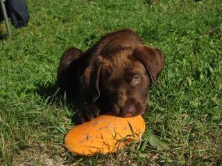 Bailey, el perro