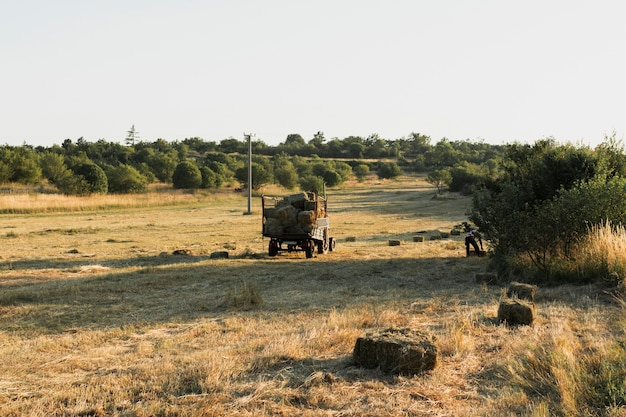 Balas de paja cuadradas en un campo de maíz cosechado
