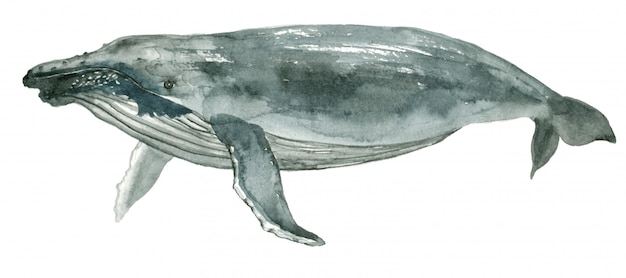 Ballena azul acuarela