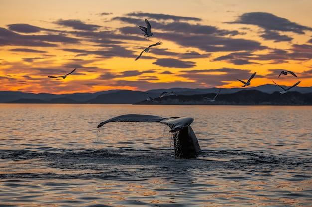 Ballenas jorobadas en el hermoso paisaje al atardecer