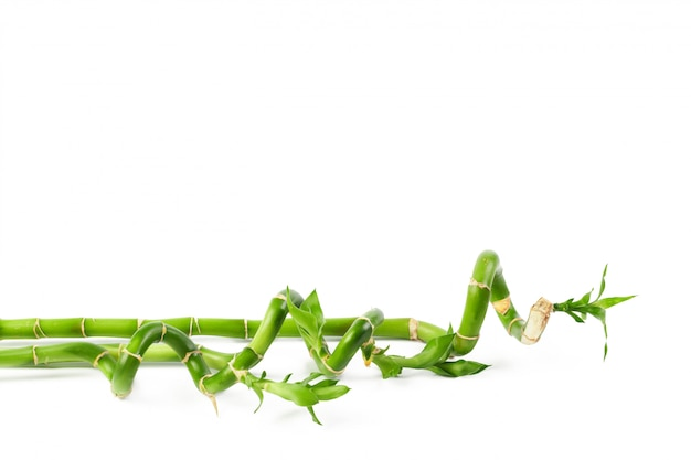 Bambú verde afortunado