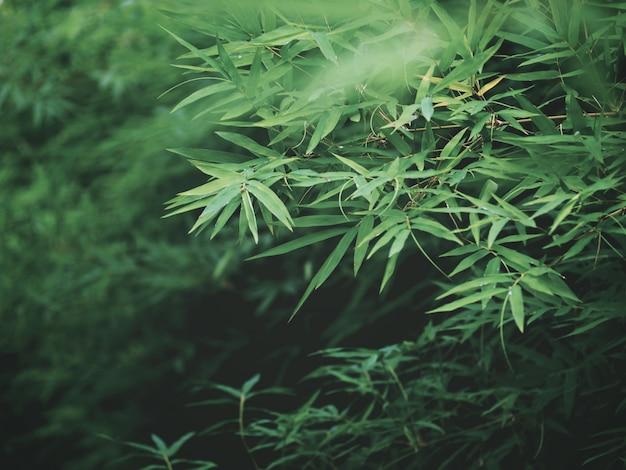 El bambú verde fresco se va en la selva tropical tropical.