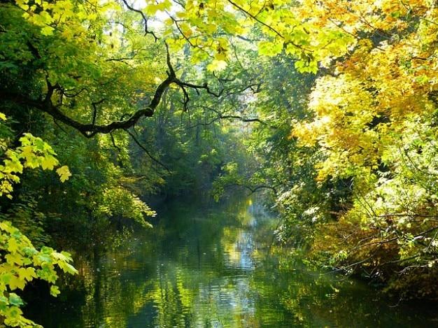 Banco del estado de ánimo danubio agua otoño árbol