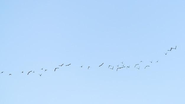 Una bandada de aves migratorias en el cielo.