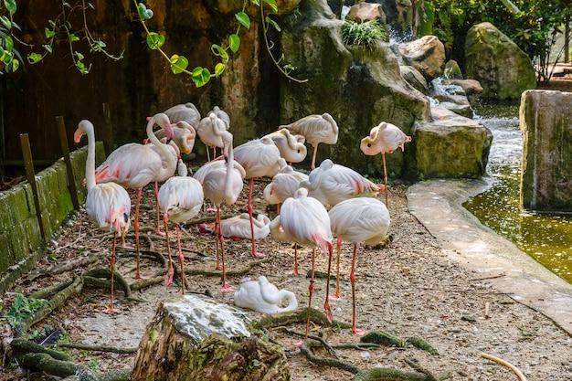 Bandada de flamencos en el zoológico.
