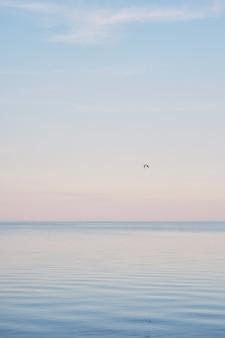 Bandada de gaviotas blancas que se enfrían y flotan en la superficie y la ola del mar azul