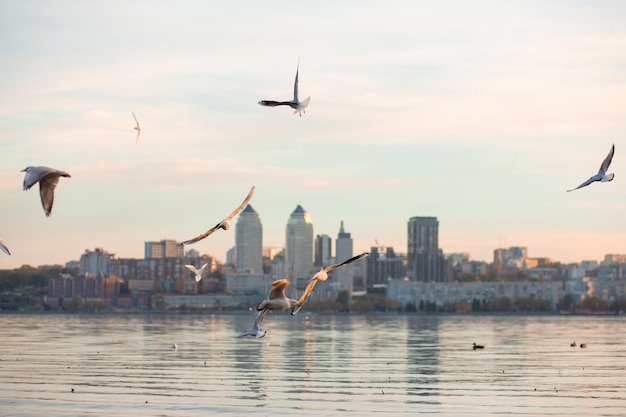 Una bandada de gaviotas a orillas del río de la ciudad.