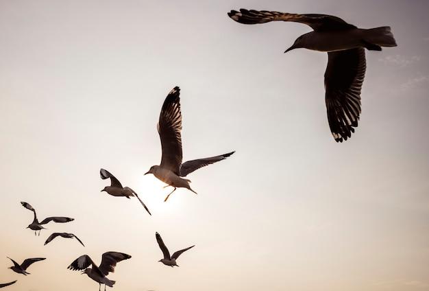 Bandada de gaviotas volando en el cielo.