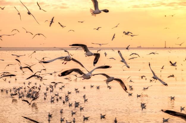 Bandada de gaviotas volando sobre el mar golfo de tailandia en la noche