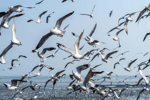 Una bandada de gaviotas volando sobre el mar