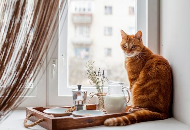 Bandeja de desayuno con un gato
