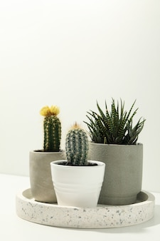 Bandeja de mármol con plantas suculentas en la pared blanca. plantas de interior