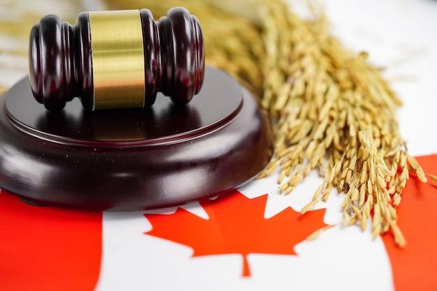 La bandera de canadá y el juez martillan con grano de oro de la granja agrícola.