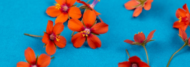 Banner floral de verano, fondo azul con pequeñas flores naranjas