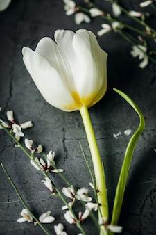 Banner de flores de primavera. tulipán de cerca.