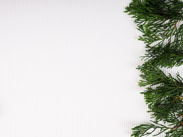 Banner de navidad, ramas de árboles sobre fondo blanco.
