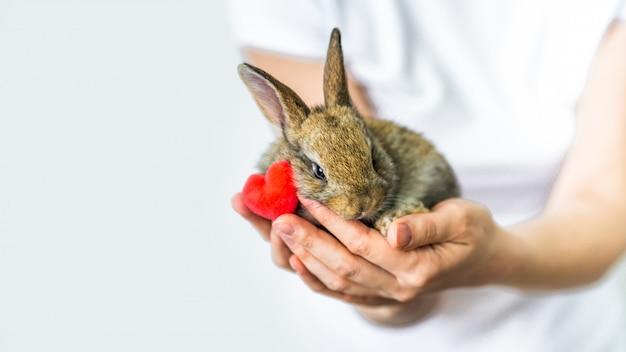 Banner pequeño conejo y corazón en manos humanas