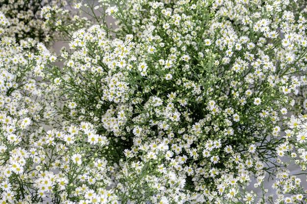 Banquete de flores gypso blanco para decoración en muchos eventos