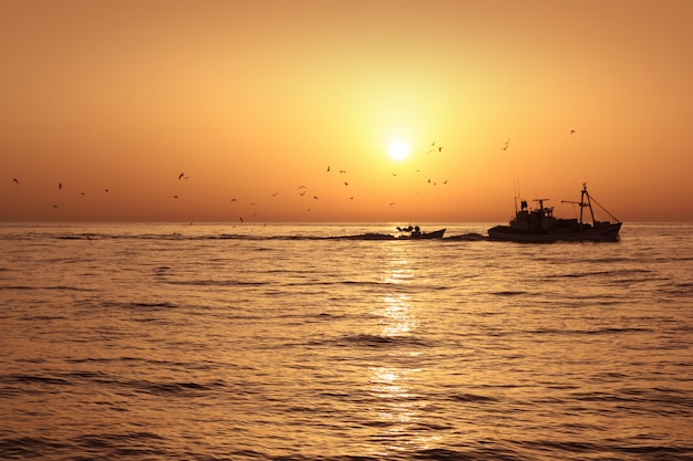 Barco pesquero profesional sardina pesca captura amanecer