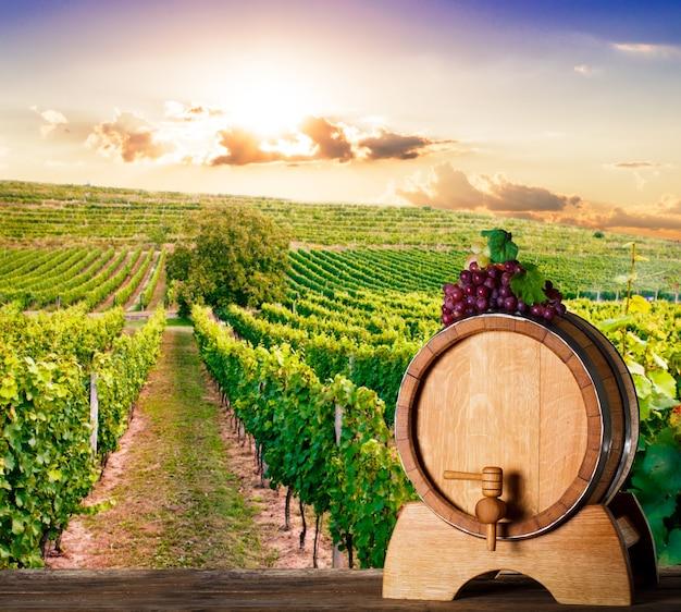 Barril de roble sobre viñedos en el fondo. concepto de bodega