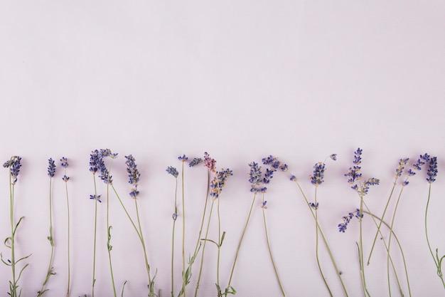 Bastante lavanda en fondo lila