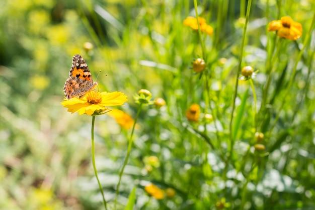 Batterfly en flores amarillas en el día de verano soleado.
