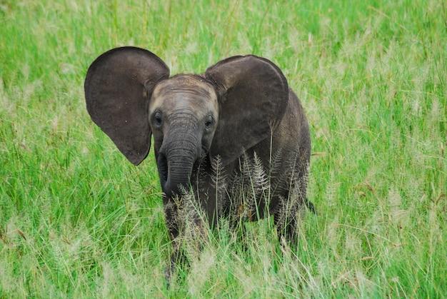 Un bebé elefante