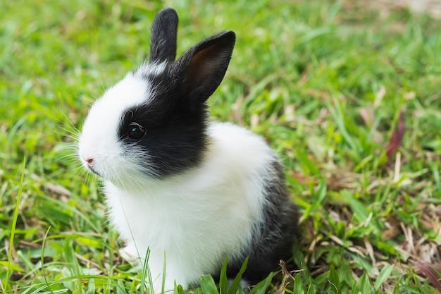 Bebé encantador 2 semanas conejo tailandés