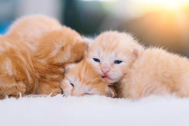 Bebé recién nacido gato rojo durmiendo el enfoque selectivo