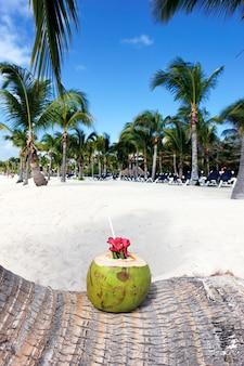 Bebida de coco en una palmera en la playa.