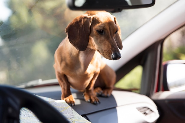 Bella mujer sentada en el coche