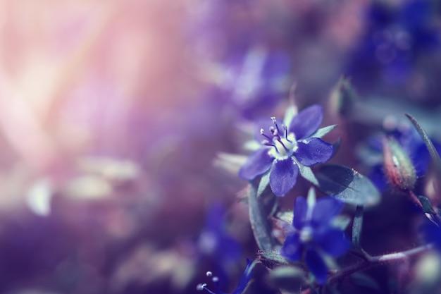 Belleza flor salvaje con sol
