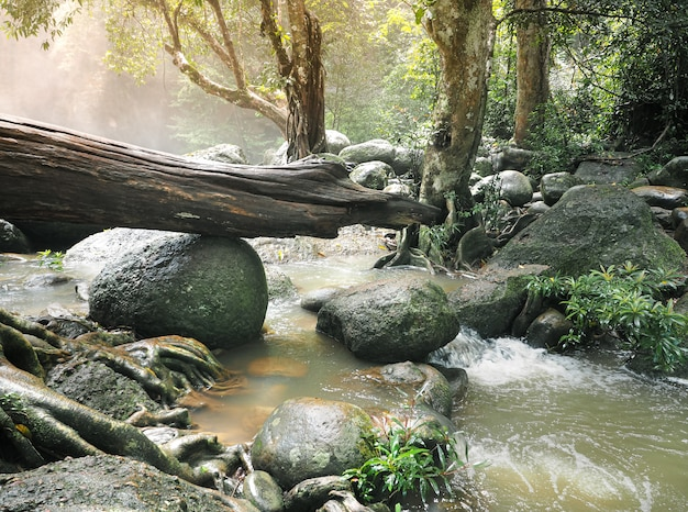 Belleza natural del bosque tropical en tailandia.