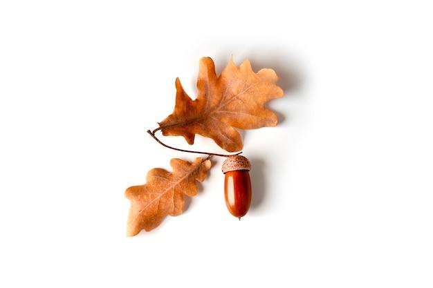 Las bellotas y las hojas del roble se aíslan en un fondo blanco. foto de alta calidad